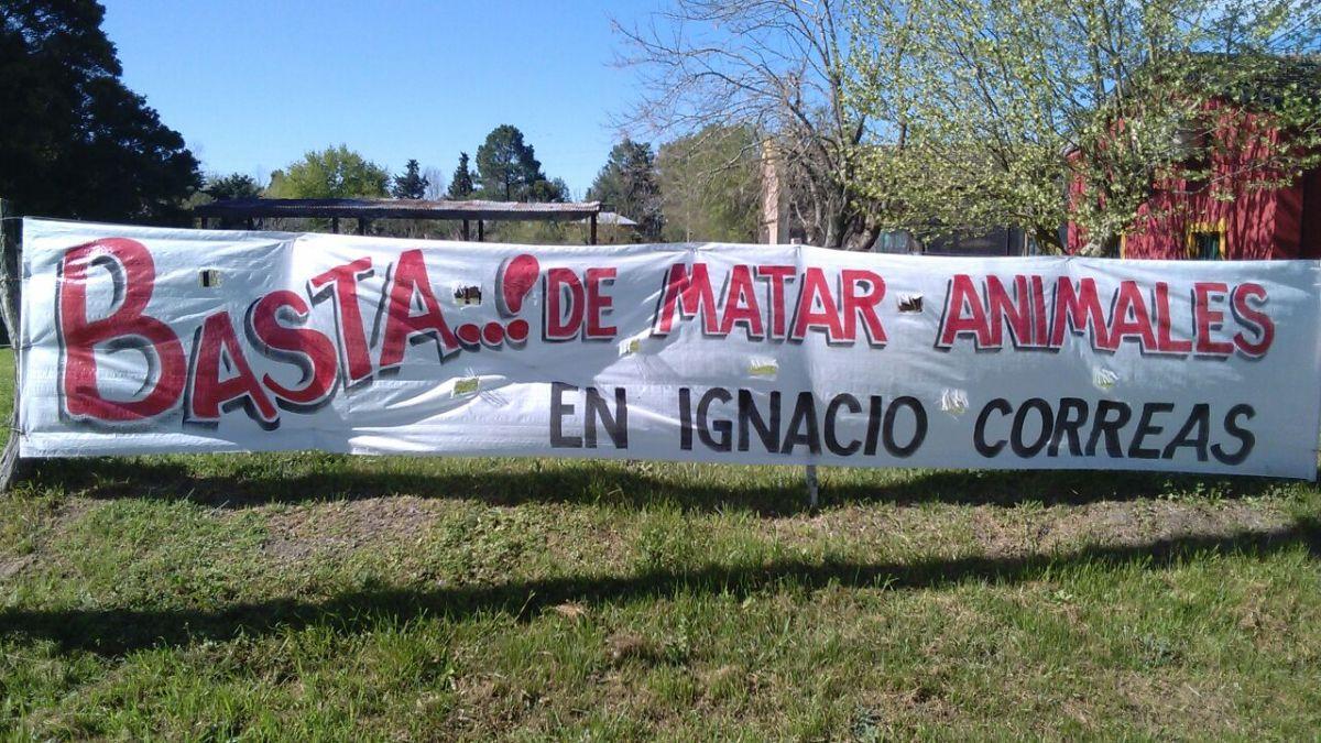 Denuncian asesinato masivo de animales en Ignacio Correa